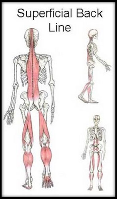 "Anatomy Help Room on Twitter: ""Identify the highlighted structure ..."